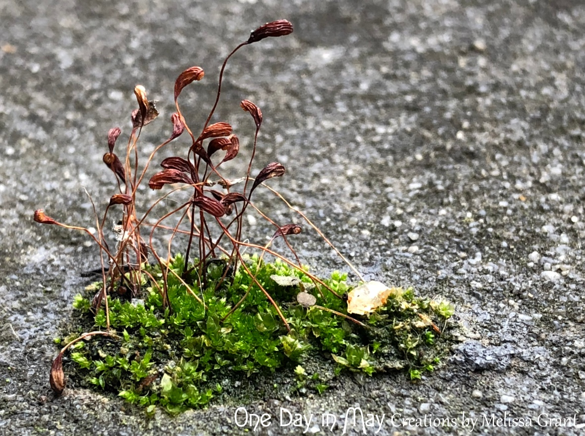 Moss landscape 8